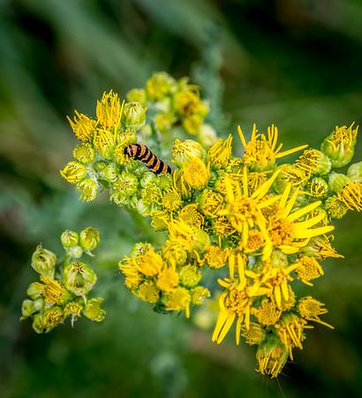 Caterpillar on flower head