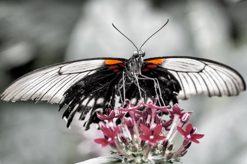 Moth At The Ready