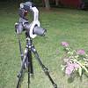Nikon D700, Nikon 200mm macro lens, Nikon SB900 flash and Ray Flash ring light