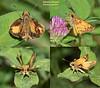 Zabulon Skippers