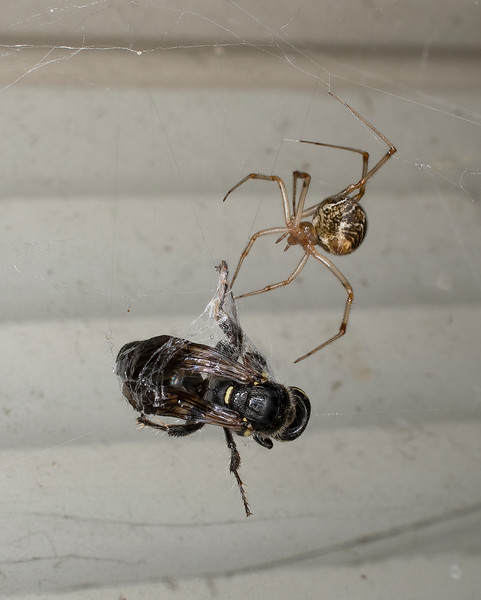 Spider and Wasp