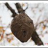 Wasp Nest - October 23, 2011 - Smiley Provincial Park, NS