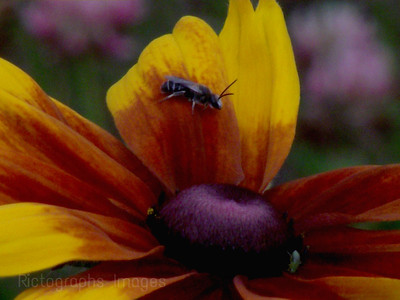 Insects,pollination,flower,photography,image,nature,yellow,brown, 1787