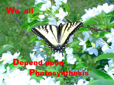 We All Depend Upon Photosynthesis