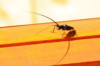 Nasty Spruce Bug