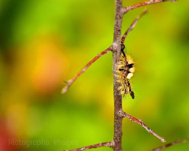 August 2018, Caterpillar,999 (310)