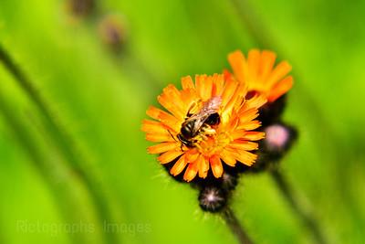 June 2021 Gathering Pollen, (224)