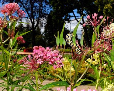Garden Sanctuary, Rictographs Images