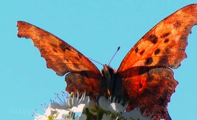 Butterfly & Blue Sky