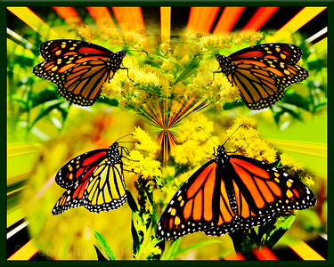 Butterfly, Nature Art, Rictographs Images