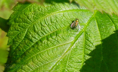 Nature, Photography, Insect, animal, green, leaf, 721
