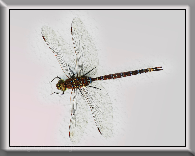 a Dragonfly On The Wall