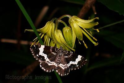 Wildflowers & Butterfly