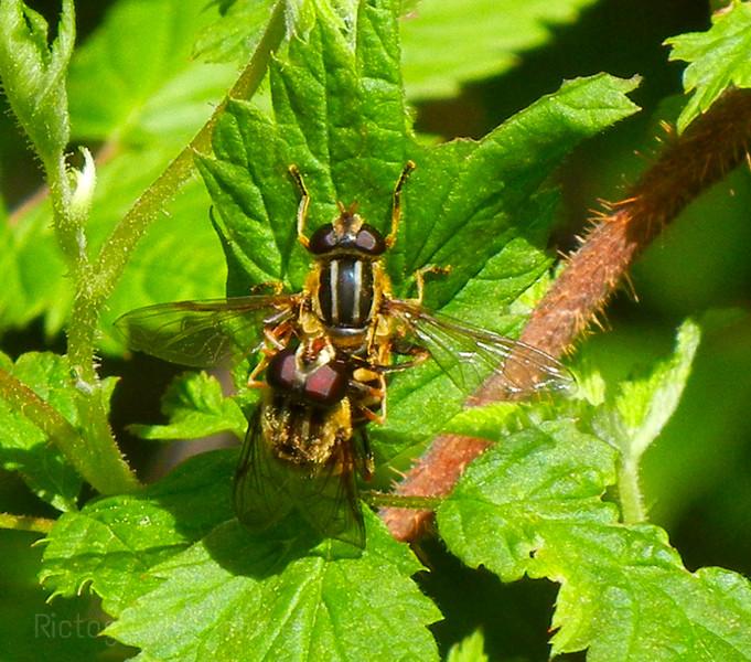 Buzzy, Buzzy, Bees