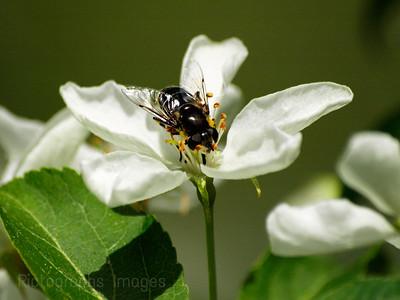 Pollinator,