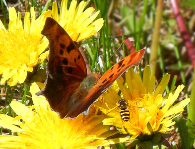 Butterfly & Bee