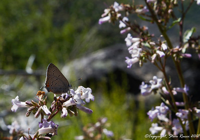 A small butterfly feeding in the flowers.