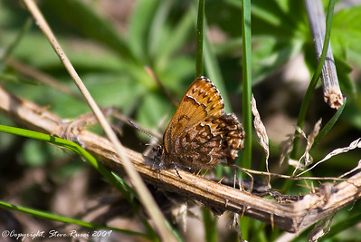 A butterfly - Grand Teton National Park