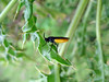 black & yellow insect field border Fort Road 020808 6354 smg