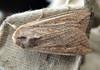 moth Dell nursery 070908 9279 smg