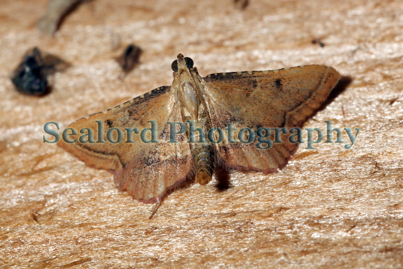moth arched 030709 6399 smg
