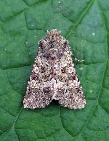 moth garden St Peter Port 210908 892 RLLord smg