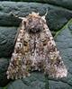 moth leanto trap 230908 1041 smg