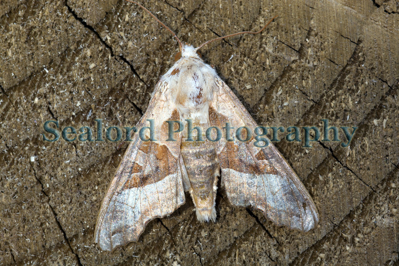 moth trap unknown ©RLLord 010709 6322 smg
