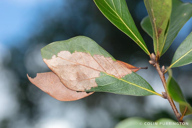 Yellow-vested moth retreat