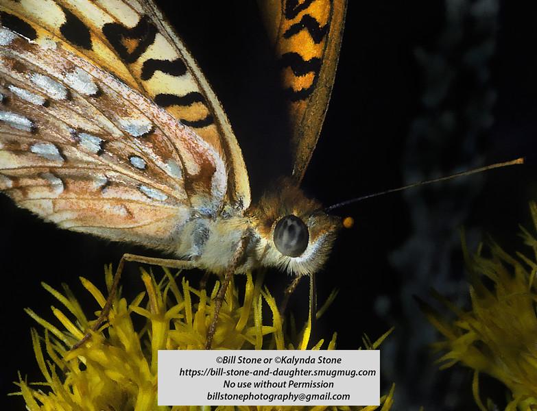 Butterfly at Hot Creek-Eastern Sierra-near Mammoth Lakes