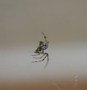 momma_spider1
