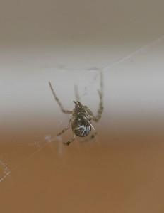 momma_spider1b