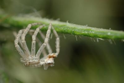 Spider molt.
