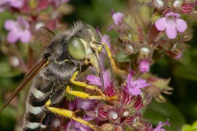 Sand Wasp. Nikon 70-300ED + 6T