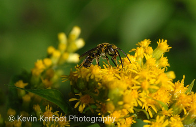 Insects0008_pp
