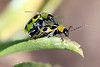 BeetleLove1690