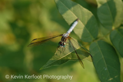 Insects0043