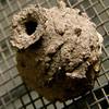 "<a href=""http://xenogere.com/2008/10/01/daubers/"">Blog entry</a>"