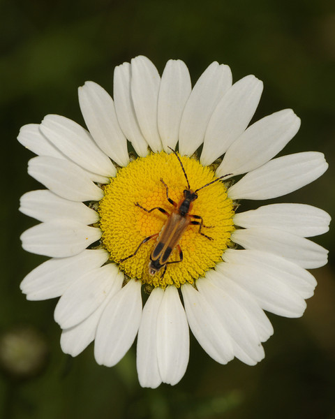 Insect sp (3)
