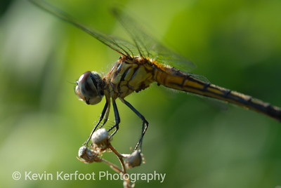 Dragonfly2007_06_26_0005