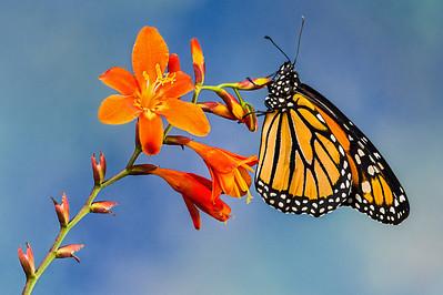 Butterfly-1445b_072113_153414_5DM3L