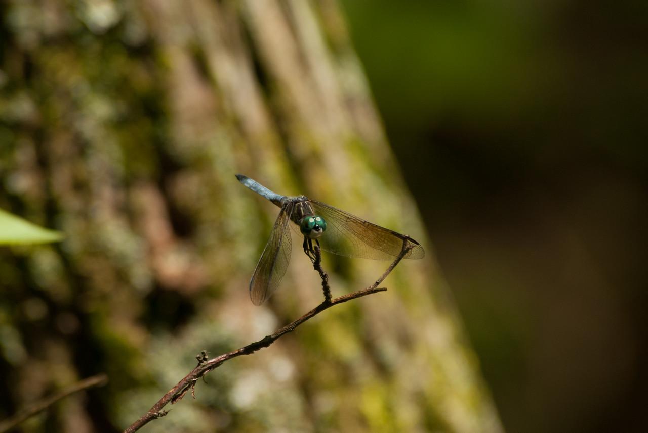 Dragon Fly (3)