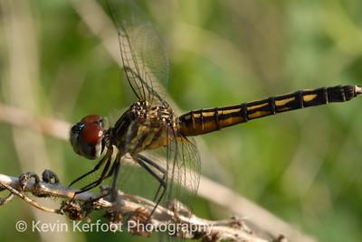 Dragonfly2007_06_26_0020