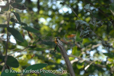 Insects0026