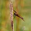 IMG_1951Dragonfly spring lake 2010