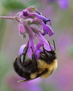 0520330295-0416-061205_1256PM-0416 bee flower printed 10x8