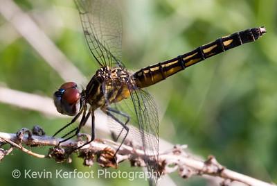 Dragonfly2007_06_26_00332007062604