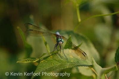 Insects0044