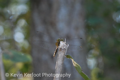 Insects0028