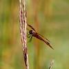 IMG_1952Dragonfly spring lake 2010